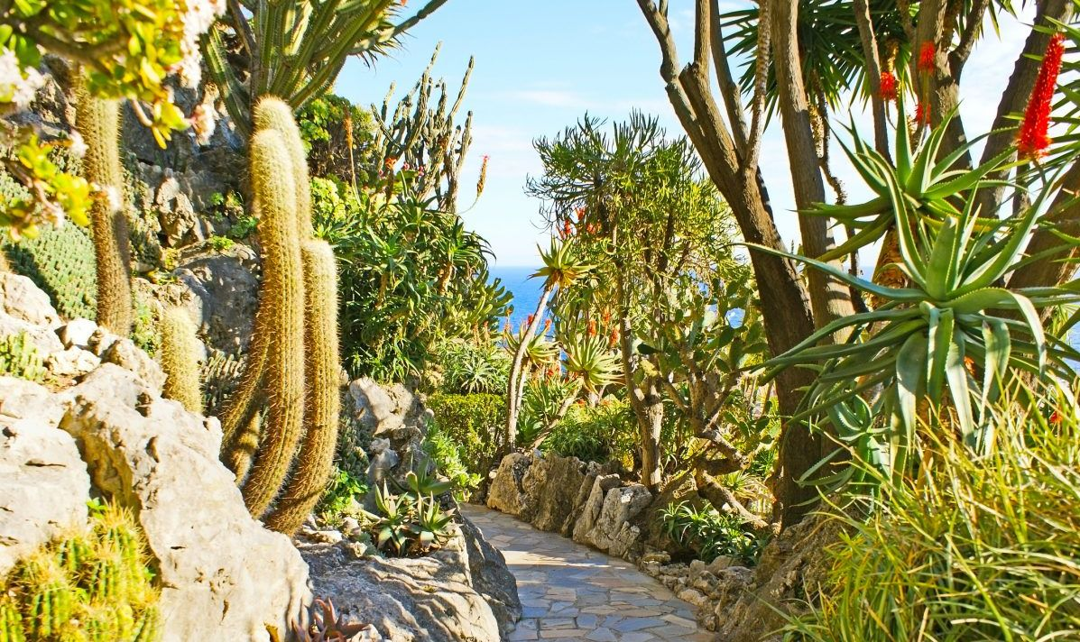 The winding way among the rocky hills with cactuses and blooming agaves in Jardin Exotique botanical garden, Monaco.
