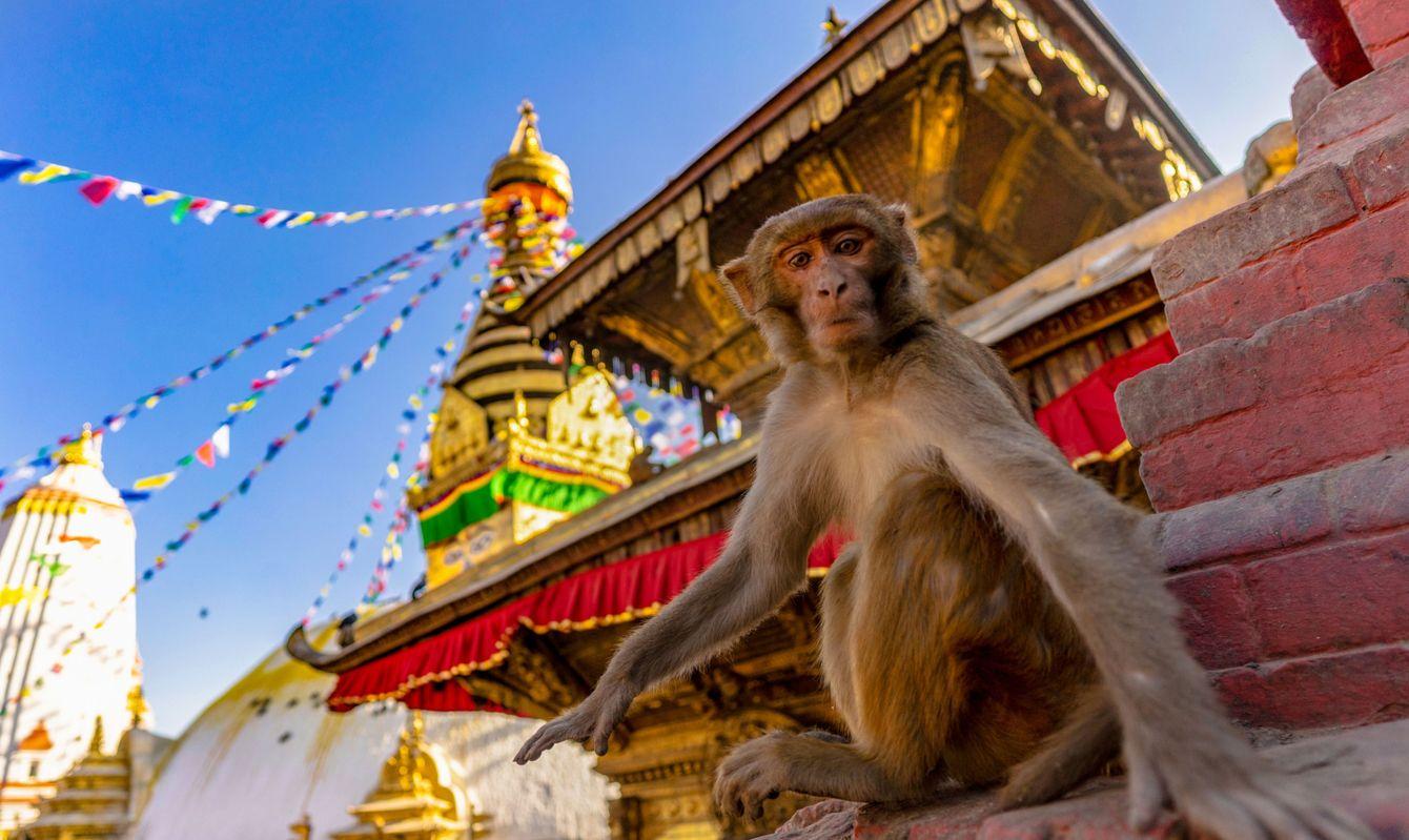 Monkeys around Monkey Temple