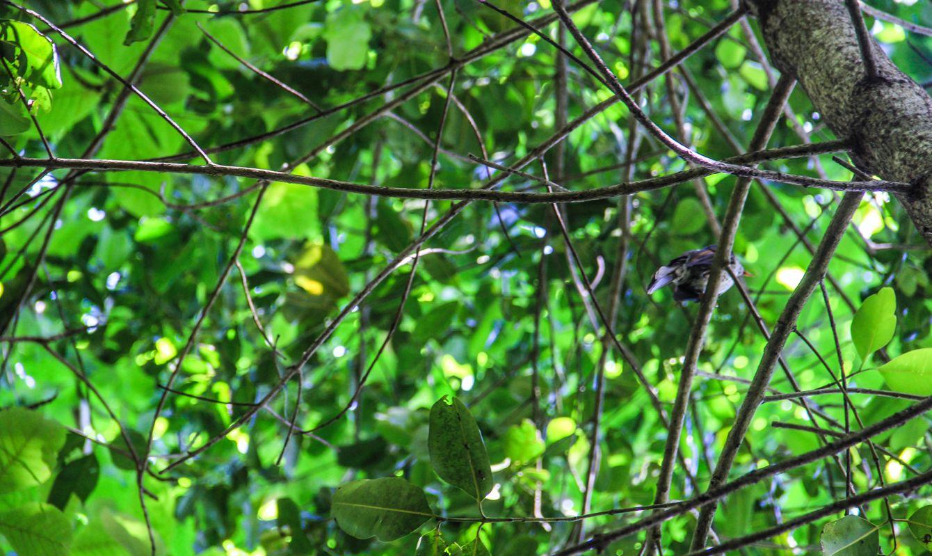 Seychelles La Digue Veuve Reserve