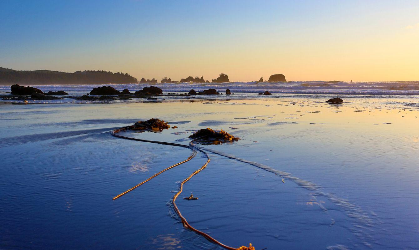 Shi Shi Beach at Olympic National Park, Washington