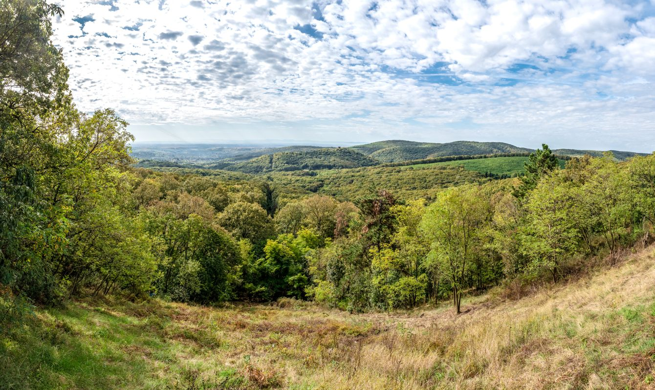 Panorama and view of the forest from the viewpoint of Fruška Gora