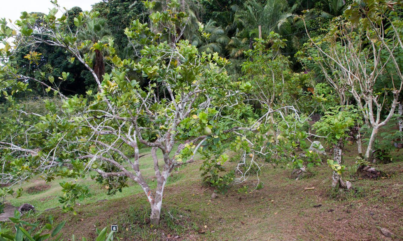 Le Jardin Du Roi Spice Garden Seychelles