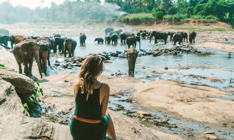 Young Caucasian woman looking at Elephants bathing in Pinnawella, Sri Lanka