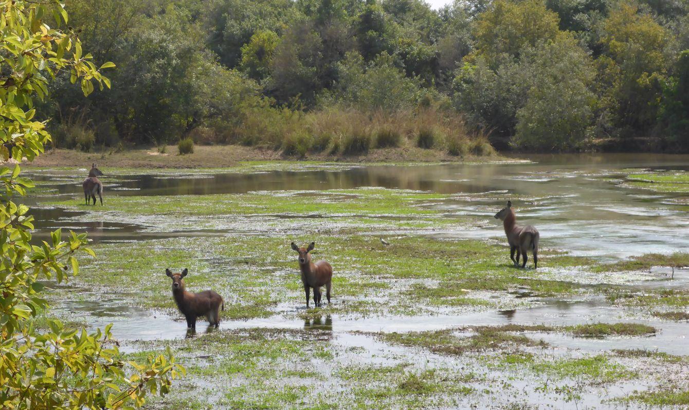 ankari game reserve, Bauchi State, Nigeria