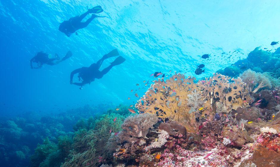 Dive buddies of Tubbataha reef.
