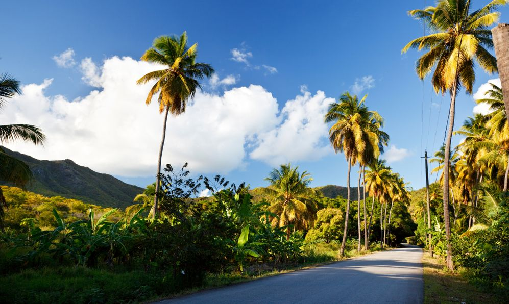 A road called Fig Tree Drive in the centre of Antigua