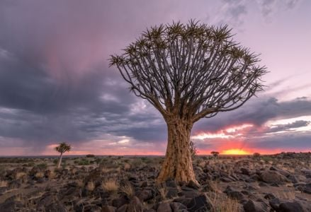 Exploring the Natural Beauty That is Namibia