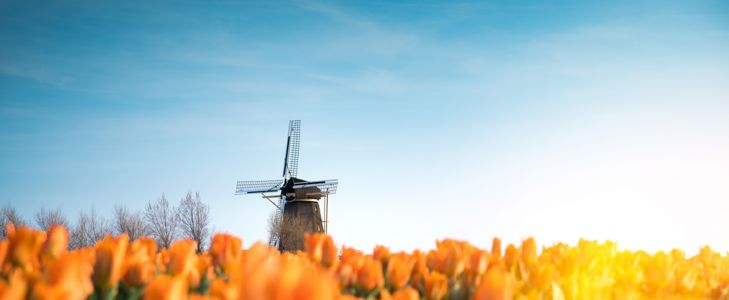 Picture Perfect Things to Do in The Netherlands
