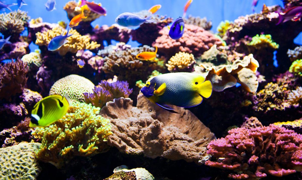 Colorful Tropical Aquarium
