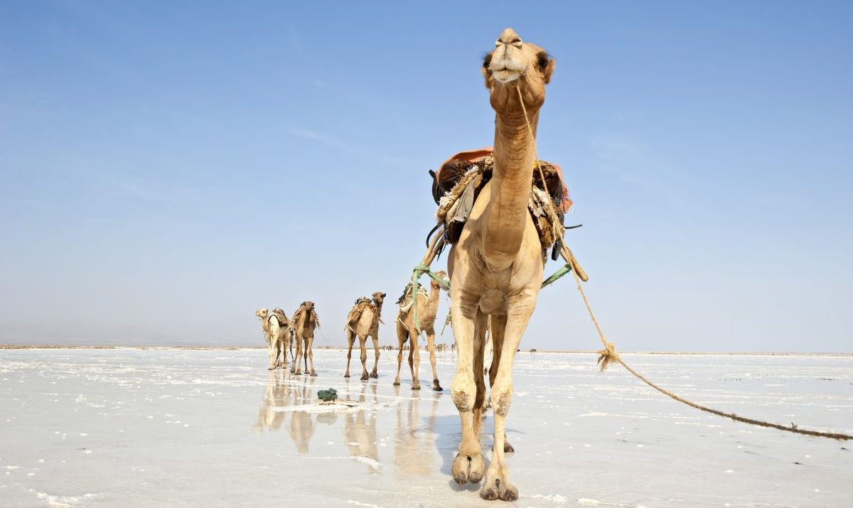 A salty landscape in the Danakil region which lies in both Eritrea and Ethiopia.