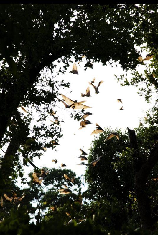 bats, trees, zambia