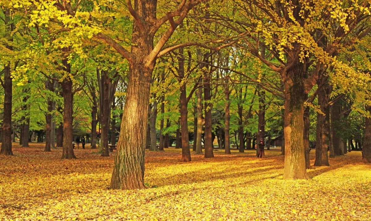 Yoyogi Park, Autumn, Shibuya Ward, Outdoors, Horizontal