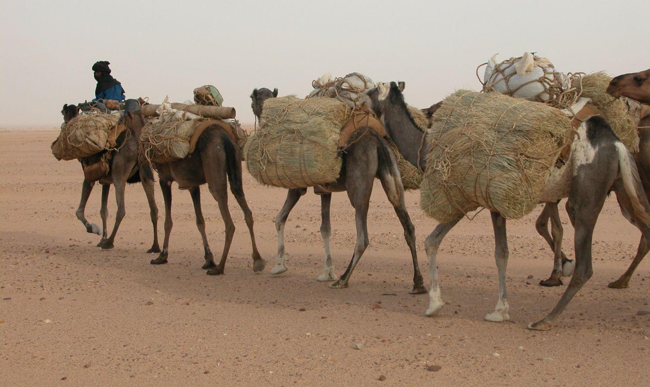 salt caravan, Tenere dessert - Niger
