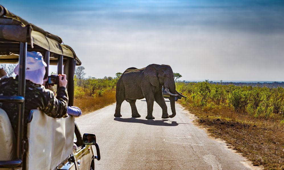 South Africa. Safari in Kruger National Park