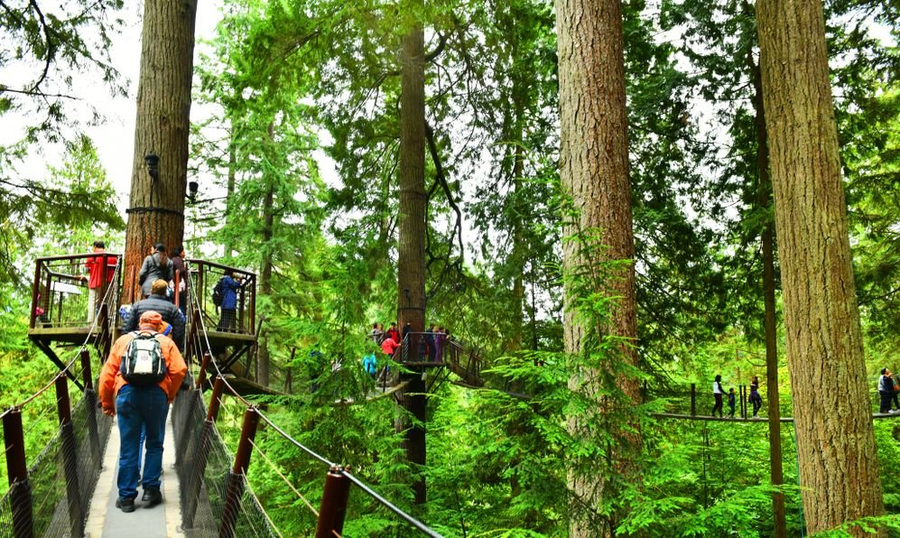 High Up in the Beautiful Capilano Tree Top Suspension Bridge in Vancouver,Canada
