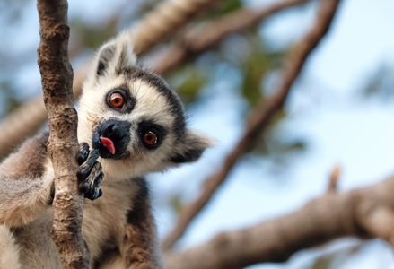 Fall in Love With Madagascar