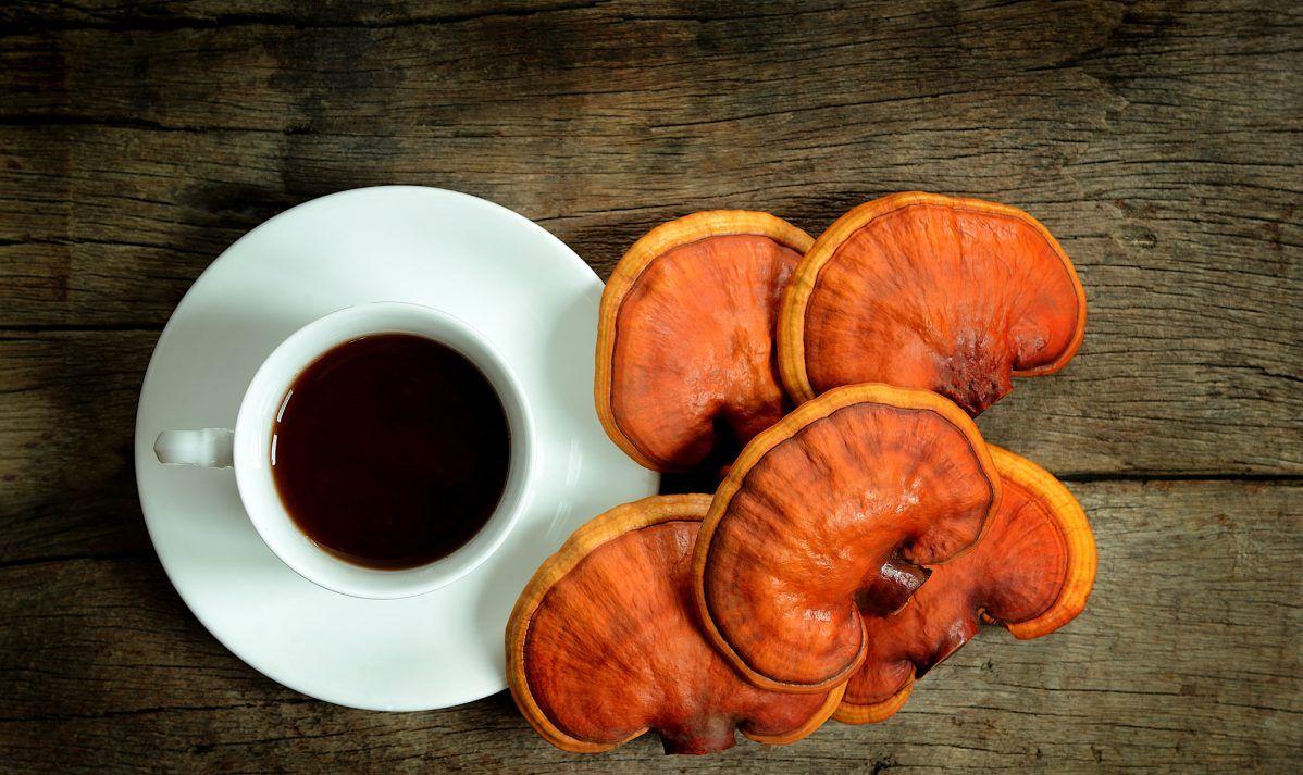 fresh reishi mushrooms tea