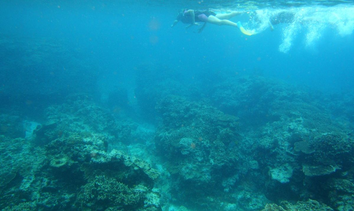 The Eco Island coral reef, which several companies provide tours for