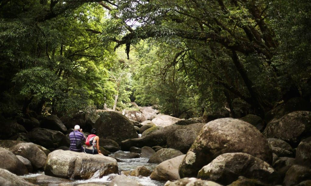 The awe-inspiring Daintree Rainforest, one of Australia's most worthwhile destinations