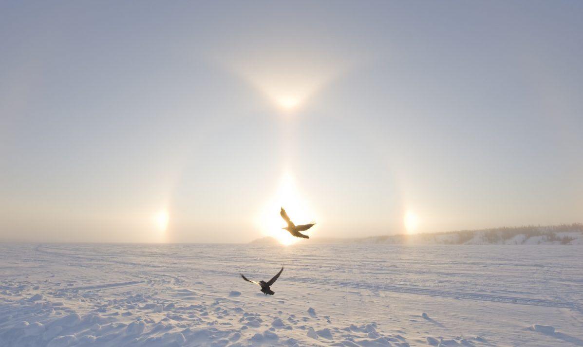 arctic birds sundog