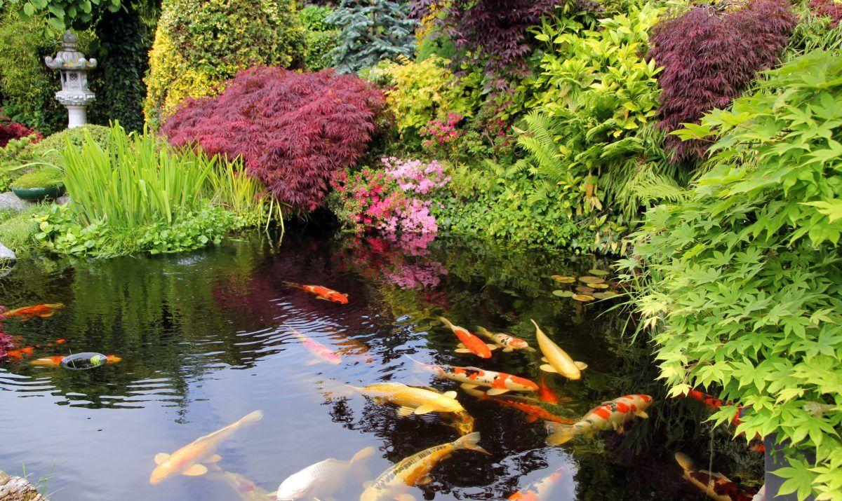 Shinzen friendship garden japanese culture