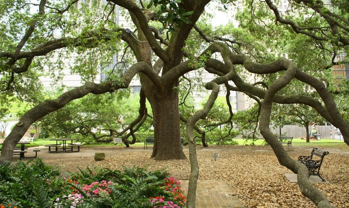 The Heritage Society at Sam Houston Park is a good place to begin your historic tour.