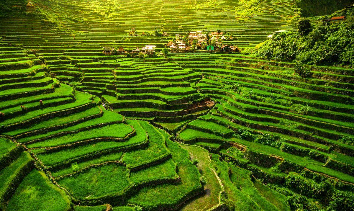 rice cordilleras philippines