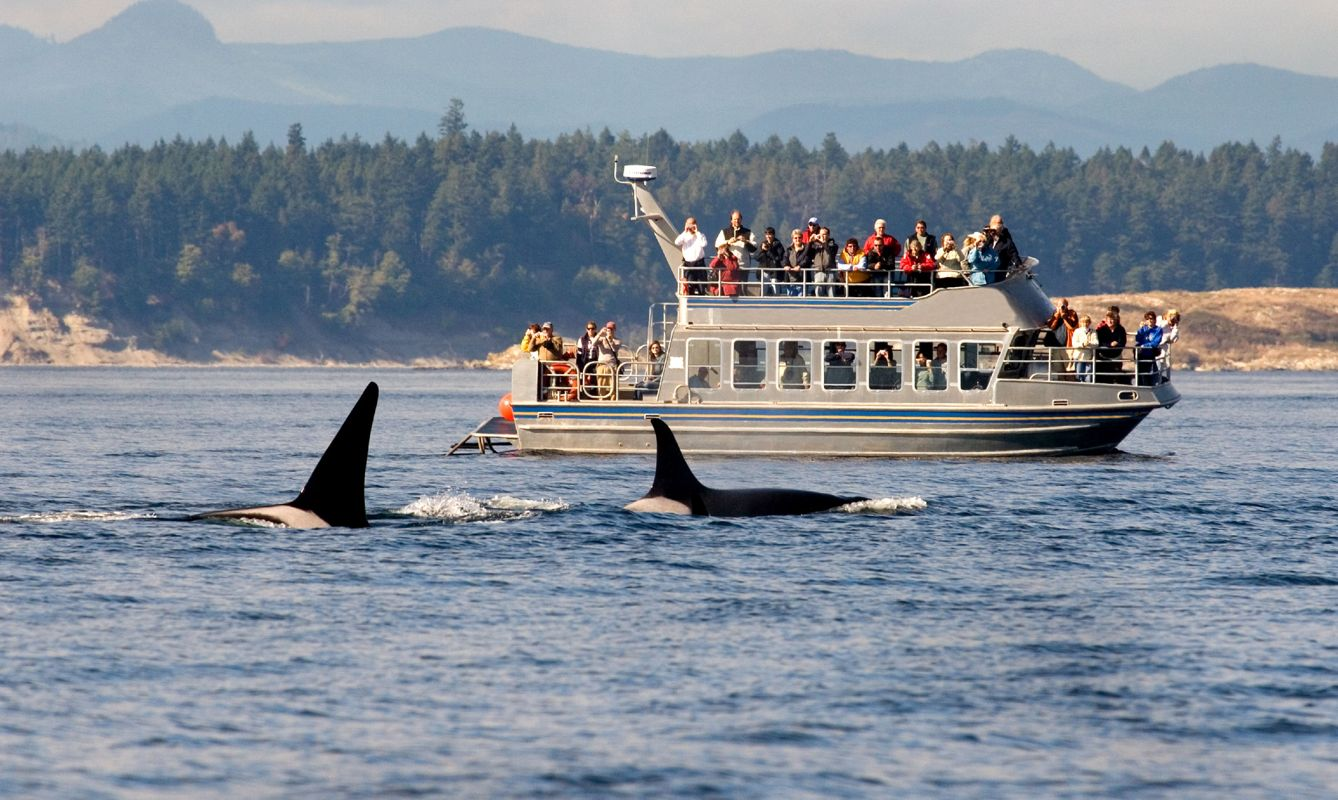 Whale Watching boat tour, Victoria, B.C