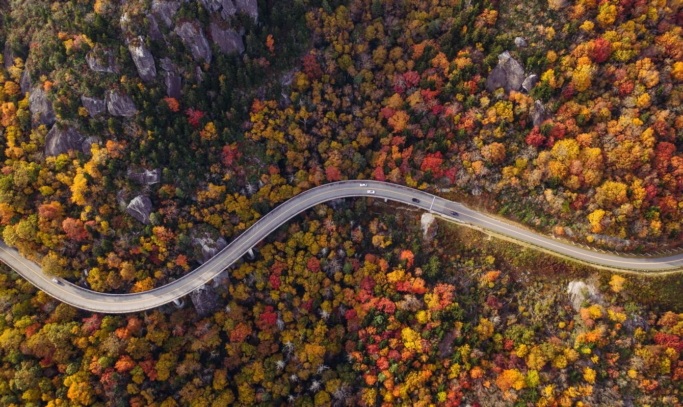 Road through forest with cars.