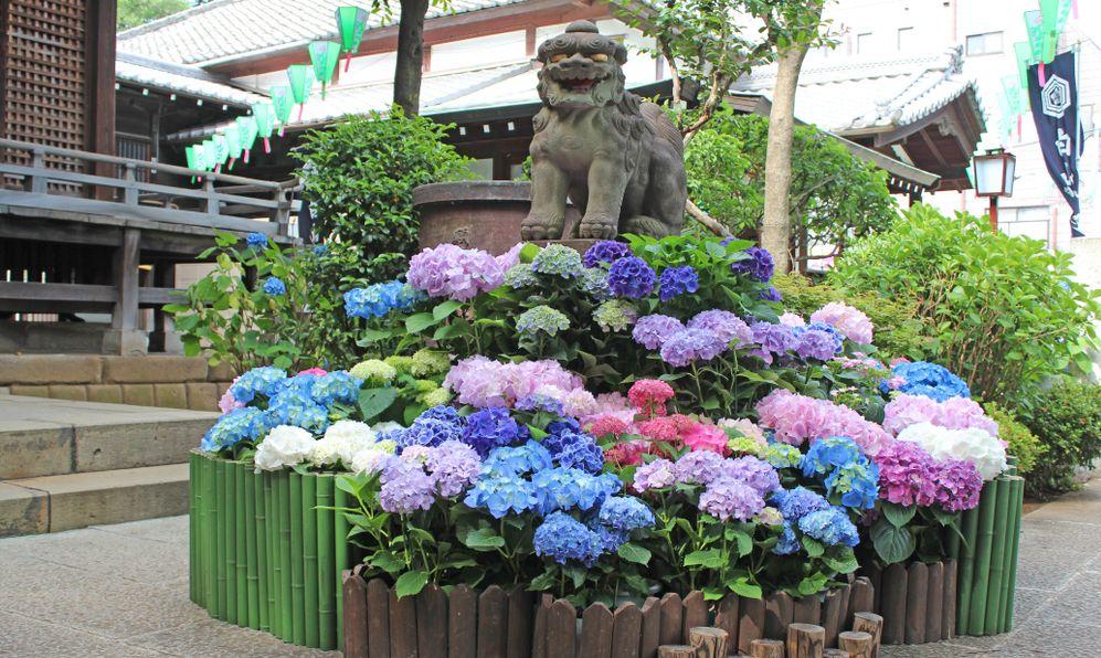 hydrangea flower festival