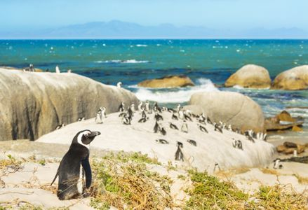 The Best Itinerary for a Week in South Africa