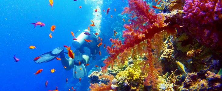 How To Make Your Great Barrier Reef Trip Awesome