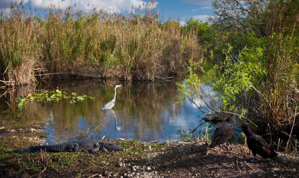 Wildlife enjoying their home in the Florida Everglades.