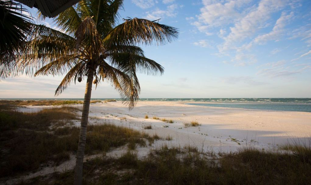 Beautiful sandy beach with palm trees along the shoreline of Florida.