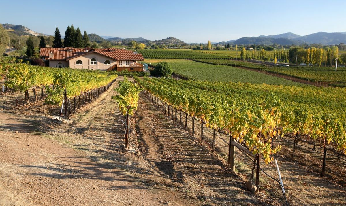 Napa Valley produces some of the finest wines out of Northern California.