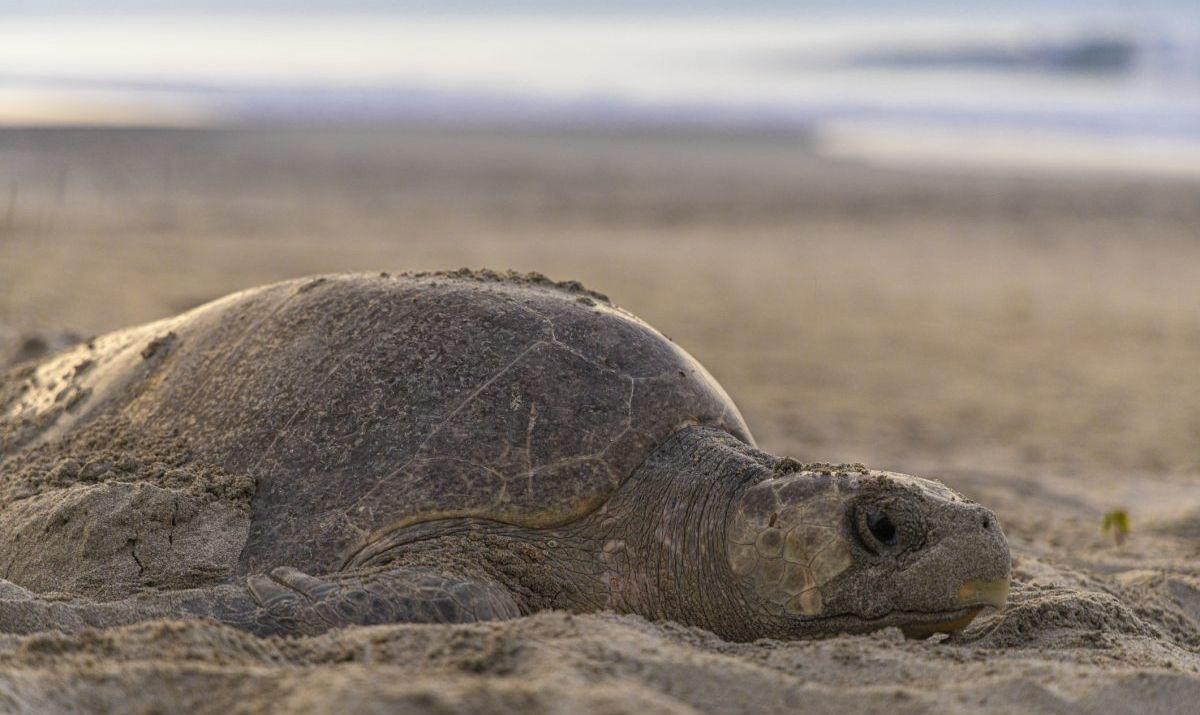 pirates beach sea turtles