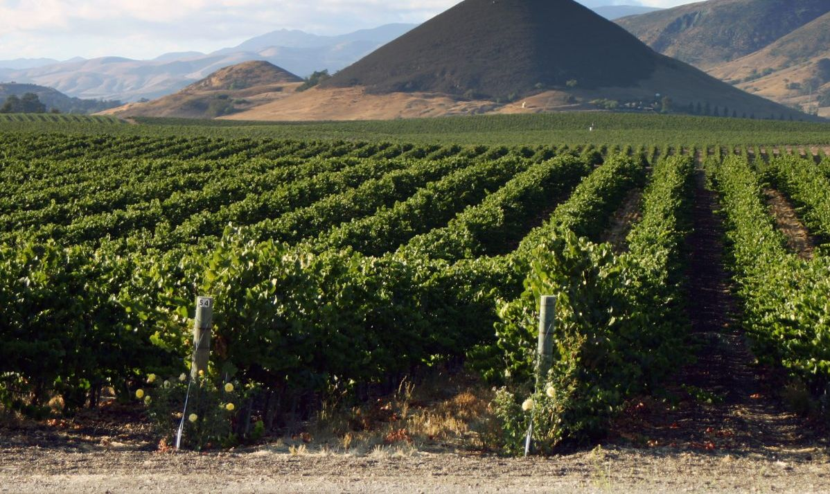 wine tasting vineyards