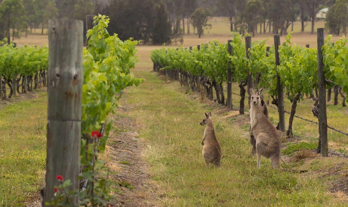 Ride past vineyards