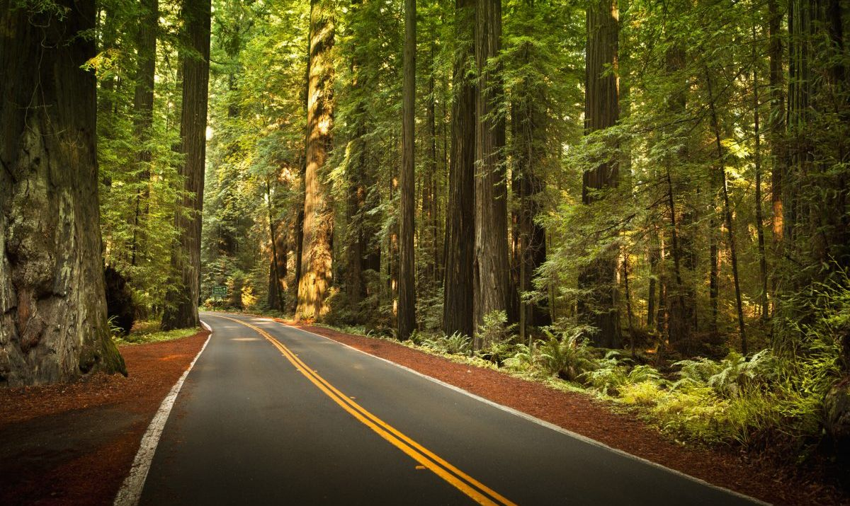 Some of the world's tallest trees are found along the Avenue of the Giants.
