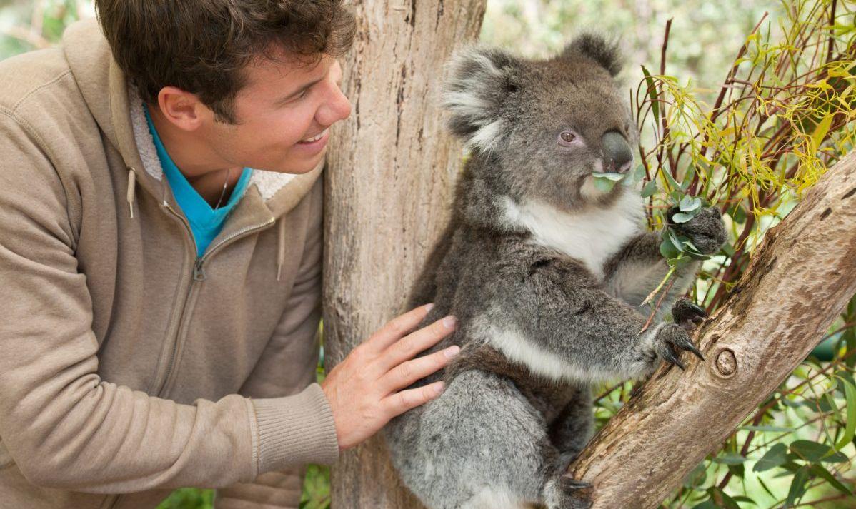Get close to a koala