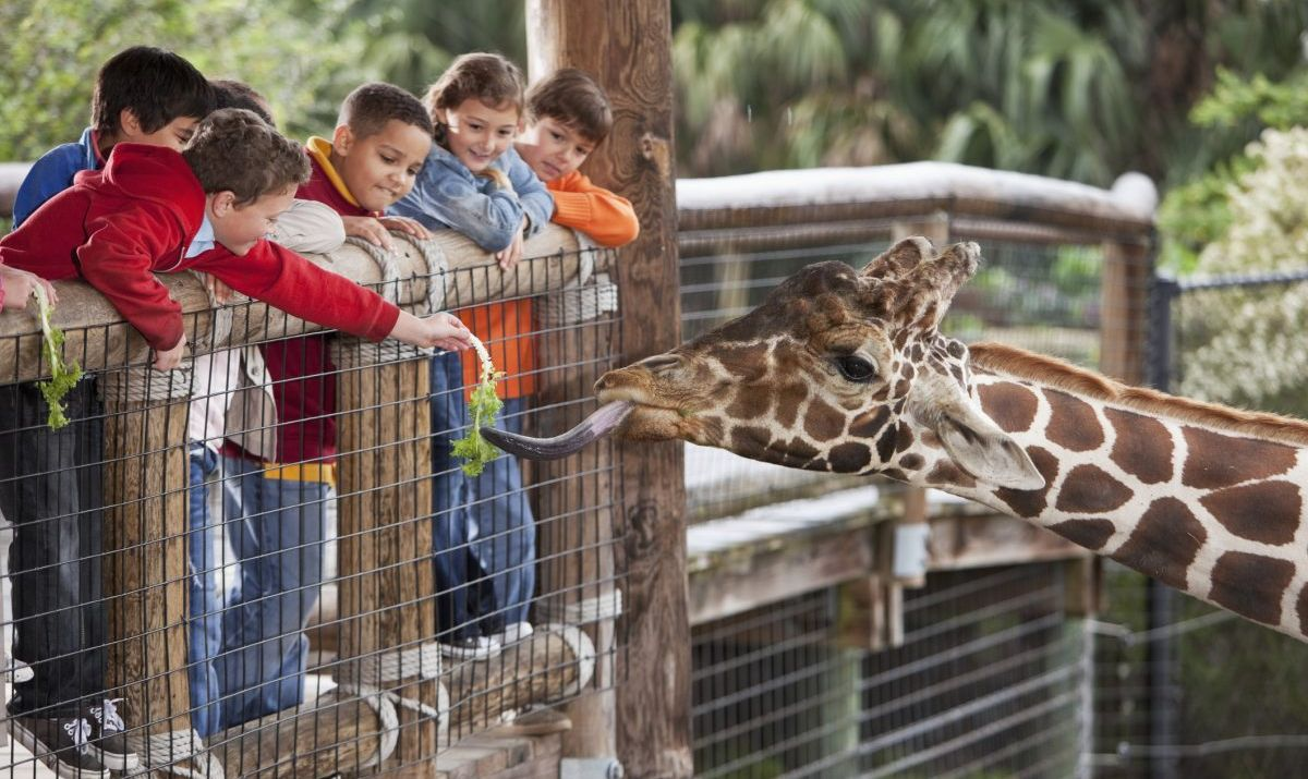 Children feeding a giraffe at a zoo