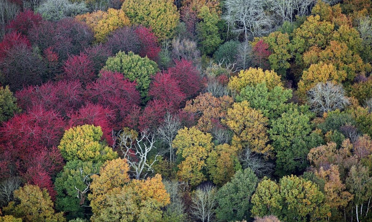 Hays Nature Preserve - Huntsville AL