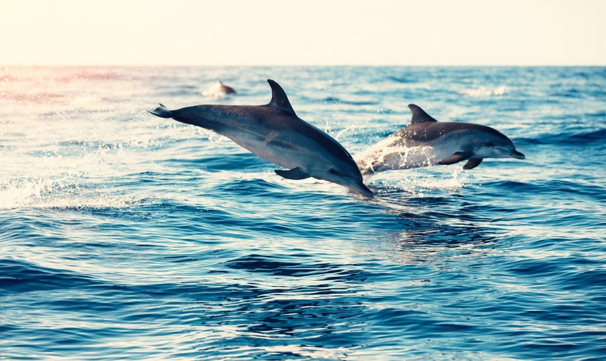 Watch dolphins frolic