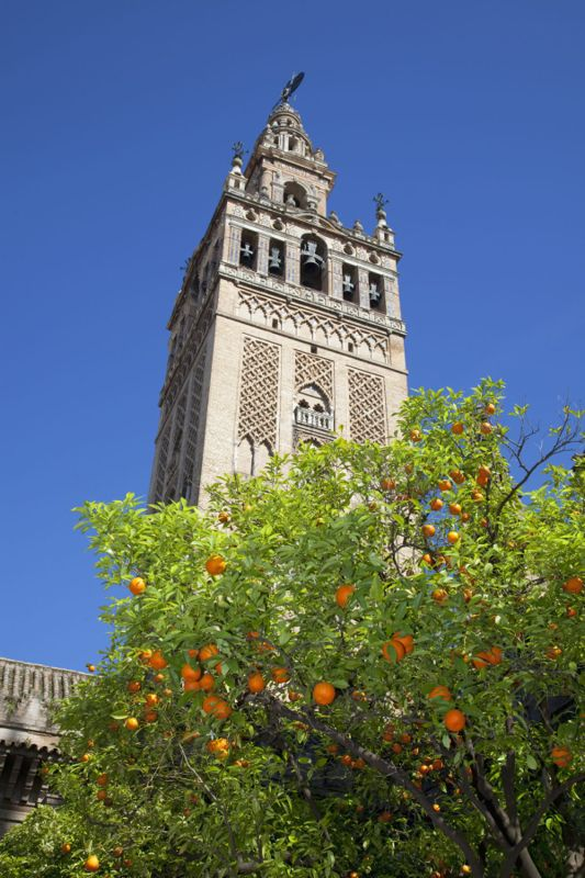 A tower overlooking an orange grove