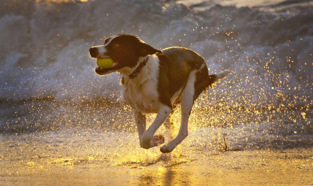 ocean beach city pier dog