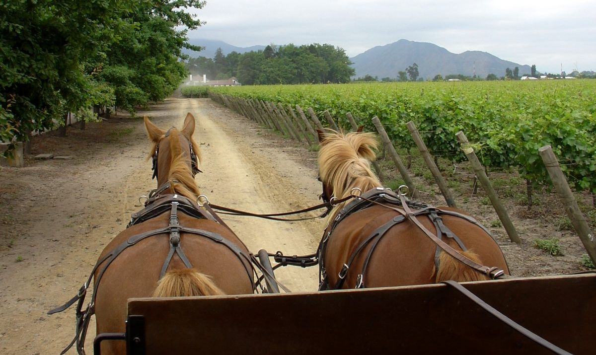 The beautiful wine country of the Temecula Valley is best toured slowly.