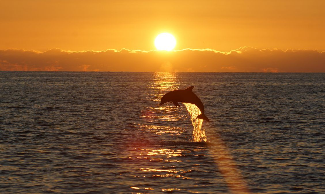 Sunset and leaping dolphin as seen from a cruise around Sanibel Island.