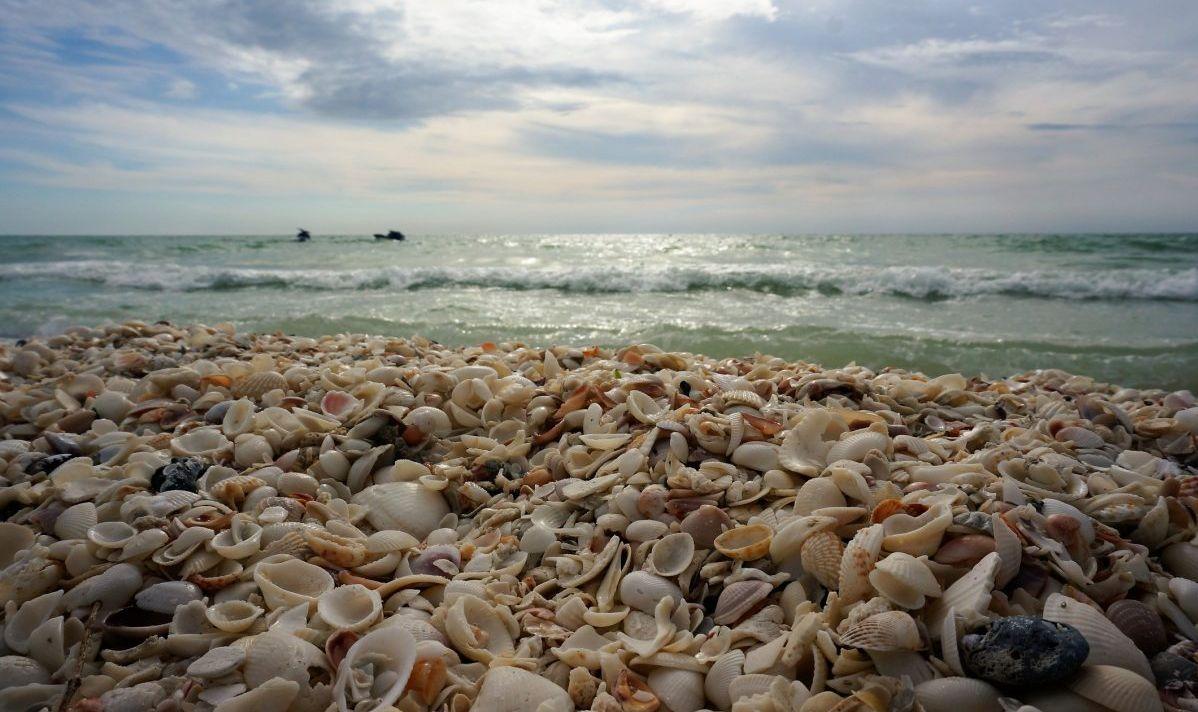 Gather Seashells at the Seashore on Marco Island Beach