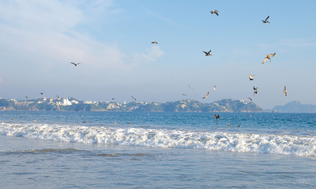 Seagulls and pelicans fish in the breaking surf of the Pacific Ocean off Miramar Beach, Manzanillo, Mexico