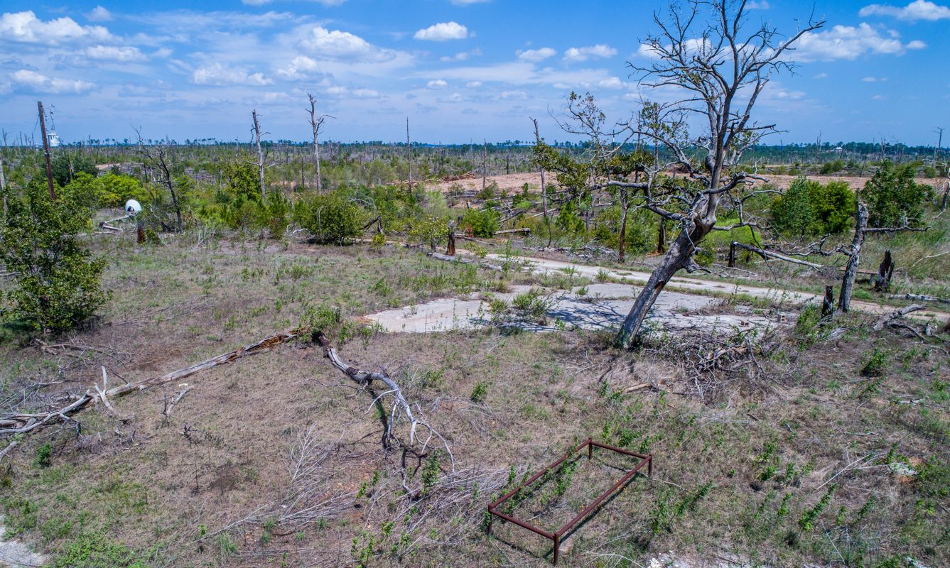 Large Forest Fire years after the Fire the forest is still scarred and dead in Bastrop , Texas , USA